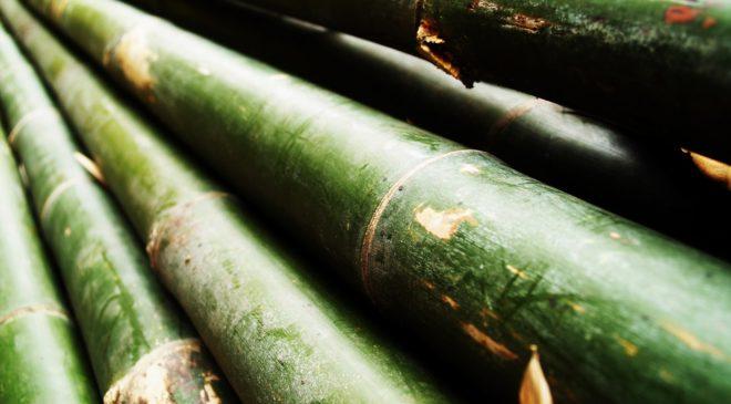 Bambus v koupelně – dopřejte si hebkost a čistotu!