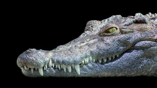 Krokodýlí ZOO v Protivíně patří mezi evropské unikáty